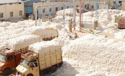 ECC takes stock of cotton situation, mulls over PSM
