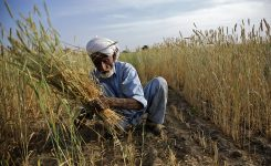 Agriculture tax: EAC proposal on transfer of collection to FBR opposed